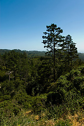 California: Forest at Point Reyes National Seashore near San Francisco. Photo copyright Lee Foster. Photo # casanf81293