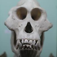 Skulls at the Horniman.