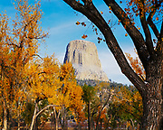 Devils Tower framed by cottonwoods in autumn, Devils Tower National Monument, Wyoming.
