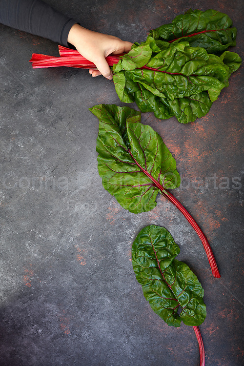A hand holding red-stemmed chard.<br /> This image is only available at Stockfood.com and can be purchased at this address: https://www.stockfood.it/fotografia-immagine/12466097/A-hand-holding-red-stemmed-chard?q=%5bType-image%5d%2f%5bPhotographer-f5319%5d%2f%5bSort-Date%5d&i=13