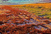 Autumn on tundra along Hudson Bay<br /> Churchill<br /> Manitoba<br /> Canada