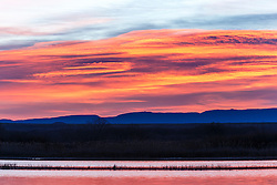 Sunrise on pond, Bosque del Apache, National Wildlife Refuge, New Mexico, USA.