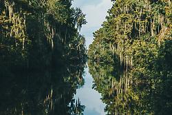 THEMENBILD - ein Sumpf, aufgenommen am 06.08.2019, New Orleans, Vereinigte Staaten von Amerika // a swamp, New Orleans, United States of America on 2019/08/06. EXPA Pictures © 2019, PhotoCredit: EXPA/ Florian Schroetter