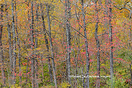 63876-02715 Fall color at Pyramid State Park Perry Co. IL