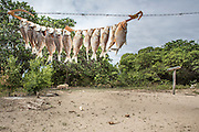 Dried fishes for storage, in the indigenous community of Katoonarib (Guyana, South Rupununi).