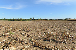 View of maize stubble field