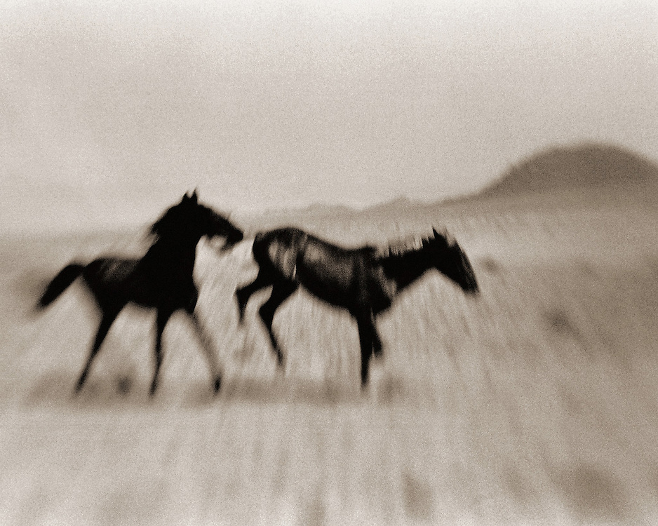 Namibian Feral Horses.<br /> <br /> Lithium prints on Oriental Seagull paper by<br /> Mike Spry.