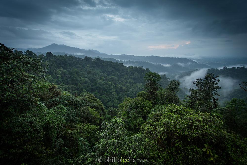 Mashpi reserve, Cloud forest, Ecuador, South America