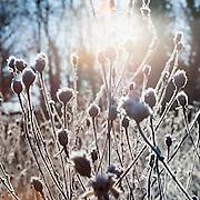 Frozen trees in winter