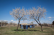 Washing drying on trees in Darpnik village, close to Armenia's capital, Yerevan. Darpnik is home to around 20 Syrian-Armenian families that live in housing provided by the government.