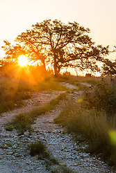 Sunset on Hill Country ranch road, Los Madrones Ranch, Texas, USA.