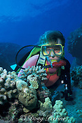diver and frogfish, Antennarius commerson<br /> The Aquarium, Kaupulehu, Kona, Hawaii, USA ( Pacific )