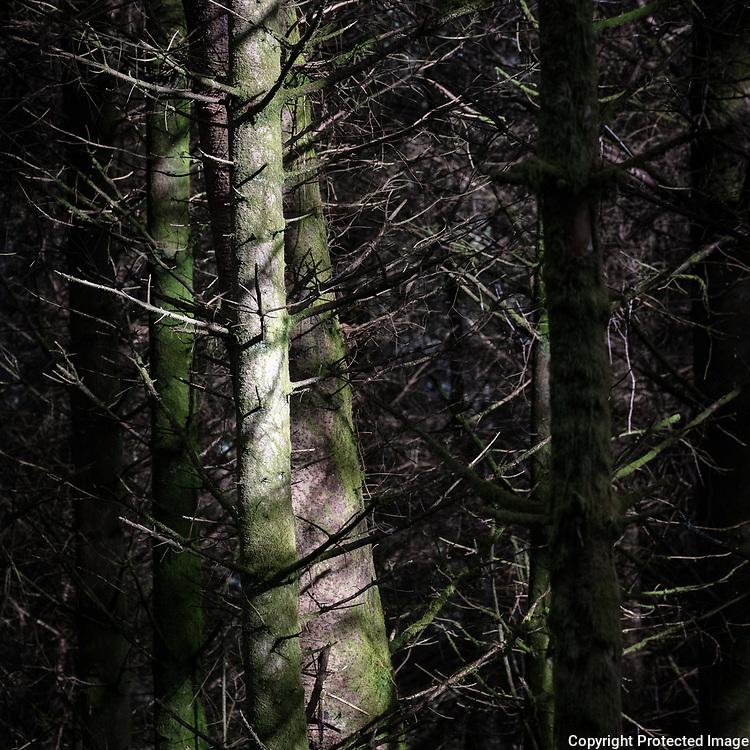 Ardgartan Forest II, Argyll & Bute, Scotland.