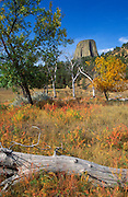 Fall color under Devils Tower, Devils Tower National Monument, Wyoming