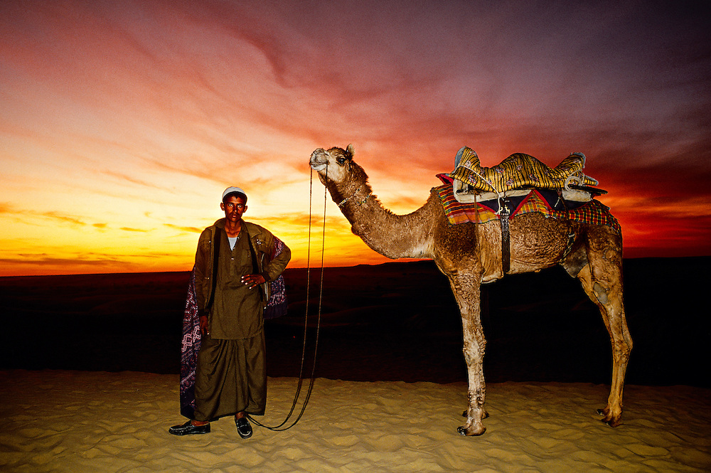 Camels, Sam Sand Dunes, Thar Desert, near Jaisalmer, Rajasthan, India