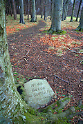 Plaque about Beech and Scotch Fir in the Phoenix Park, Dublin