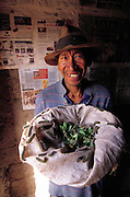Salvador Ticona displays his collection of fuzzy waytampu caterpillars. The caterpillars aren't edible until the pupal stage, Salvador keeps the larvae on the trees in his courtyard until they mature. Chinchapuijo, Peru. (Man Eating Bugs page 156)