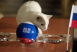 June 19, 2018 - Saint Petersburg, Russia - June 19, 2018. - Russia, Saint Petersburg. - State Hermitage Museum deaf cat Achilles, the 2018 FIFA World Cup animal oracle, predicts the result of the 2018 FIFA World Cup match between Russia and Egypt. (Credit Image: © Russian Look via ZUMA Wire)