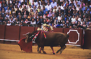 """Bull in the arena with banderillas on flanks..Bullfighting in Sevilla's famous bullring """"La Real Maestranza"""" is a significant part of the Feria de Abril..The Feria de abril de Sevilla, """"Seville April Fair"""" dates back to 1847. During the 1920s, the feria reached its peak and became the spectacle that it is today. It is held in the Andalusian capital of Seville in Spain. The fair generally begins two weeks after the Semana Santa, Easter Holy Week. The fair officially begins at midnight on Monday, and runs six days, ending on the following Sunday. Each day the fiesta begins with the parade of carriages and riders, at midday, carrying Seville's citizens to the bullring, La Real Maestranza. Seville. Andalusia. Spain...Blood sport ending in the killing of a bull in front of thousands of spectators. An entertainment and tradition derived from the ancient gladiatorial spectacles of Roman times. This activity is loved and defended by 'affecionados' who see the artistry and traditions whilst it is detested by animal rights activists, environmentalist and ecologists for its cruelty to animals"""