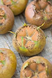 Medlars on a wooden table - Mespilus