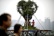 CHONGQING, CHINA - SEPTEMBER 03: (CHINA OUT) <br /> <br /> Living Tree Root Carving On 13.6-Meter-High Cement Rack<br /> <br /> A 20-year-old ficus virens gets transfered to a 13.6-meter-high cement rack on September 3, 2014 in Chongqing, China. The owner of a 20-year-old ficus virens Liu Guangrui plans to do root carving to his live tree on a 13.6-meter-high cement rack on Thursday.<br /> ©Exclusivepix