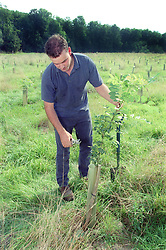 Man pruning tree in field,