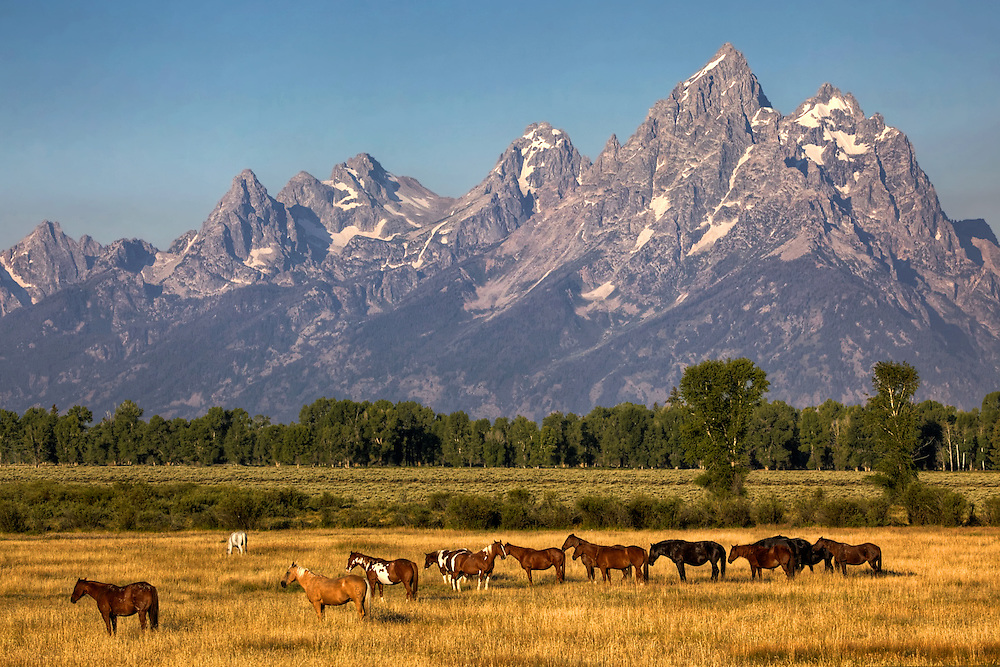 Horses out to pasture with a majestic backdrop in Grand Teton National Park, Wyoming.