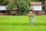 Muna Thapa carries a bucket of water across a rice paddy near her home. Water from the ground source can be used for irrigation, for livestock and to replenish the supply in the family's biosand filter.
