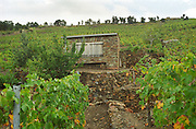 A stone vineyard hut for tools or to have a pick nick, in the vineyard slopes of Collioure, Languedoc-Roussillon, France