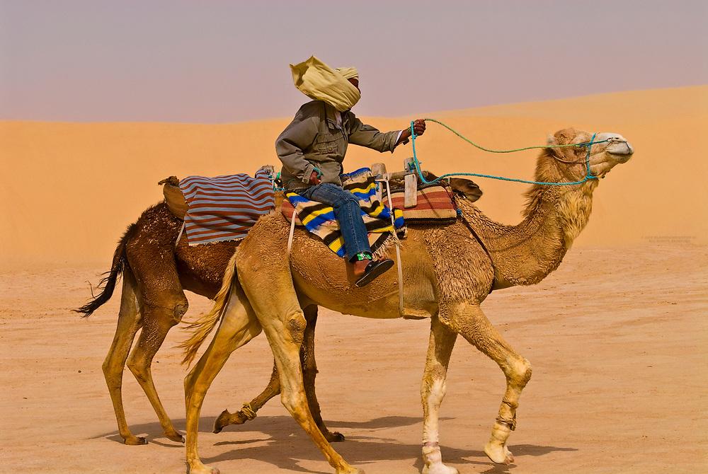 Camels walking in the Sahara Desert near Ong El Jemel, Tunisia