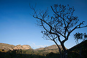 Santana do Riacho_MG, Brasil...Arbusto no Alto Palacio no Parque Nacional da Serra do Cipo...The shrub in Alto Palacio in the Serra do Cipo National Park...Foto: JOAO MARCOS ROSA / NITRO