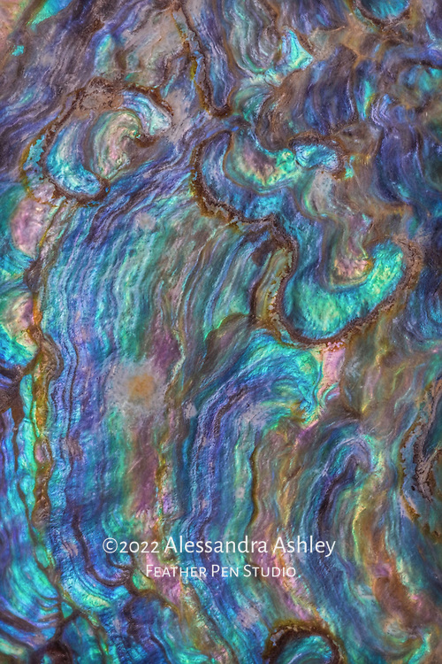 Intricate patterns and textures found inside iridescent abalone shell. Painted effects blended with original photo.
