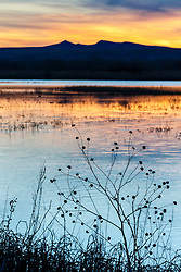 Sunset landscape on pond, Bosque del Apache, National Wildlife Refuge, New Mexico, USA.