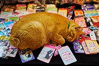 Taïwan, district de New Taipei, Houtong village, Village des chats, boutique de souvenirs // Taiwan, New Taipei county, Houtong Cat Village, souvenir shop