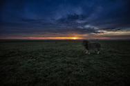 His Sovereign Majesty canvases the vast savannah plains of the Maasai Mara at sunrise.