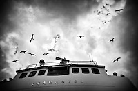 Black and white photo, birds flying, cloudy sky from a ship, Sognefjord in Norway.