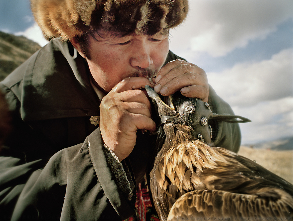 Hunter force-drinking water to his eagle. <br /> Mouth to beak. In between 2 flights, this thirsty eagle is given water by its owner.<br /> <br /> Eagle Hunting festival in Western Mongolia, in the province of Bayan Olgii. Mongolian and Kazak eagle hunters come to compete for 2 days at this yearly gathering. Mongolia