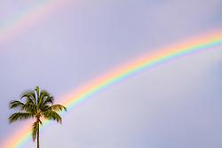 double rainbows over coconut palm, Honolulu, Oahu, Hawaii, USA