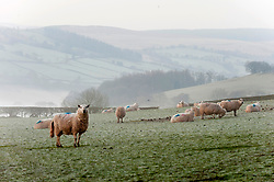 © Licensed to London News Pictures. 06/03/2020. Builth Wells, Powys, Wales, UK. The valleys near Builth Wells in Powys are filled with low cloud this morning after tempertures dropped to around minus 2.5C. Photo credit: Graham M. Lawrence/LNP