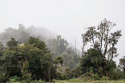 Rainforest trees mist mountains landscape