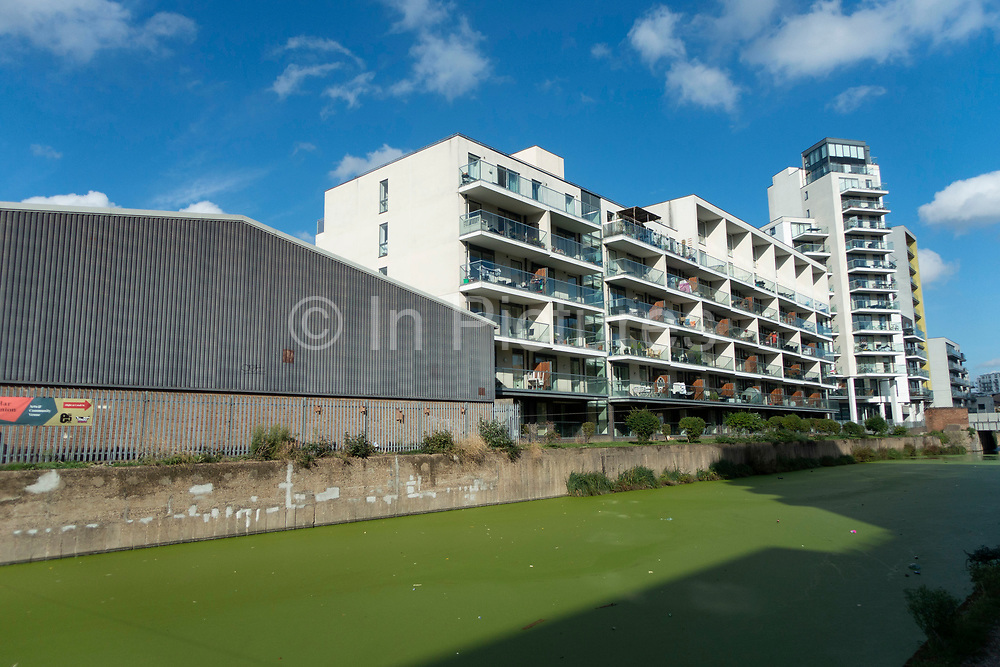 Apartment buildings built against the water on Lea Navigational Canal which is covered in green duck weed in East London, England, United Kingdom.