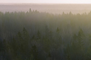 Morning haze over boreal forest