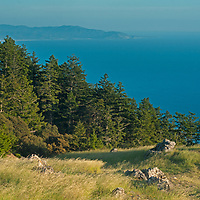 Dense forests and grasslands grow high above the Pacific Ocean on west slopes of Mount Tamalpais in Marin County, California.  San Francisco is just out of frame to the left.