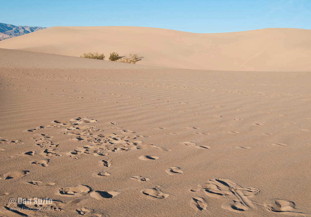 Footprints of people and animals on the Mesquite Flat sand dunes, Death Valley National Park, California