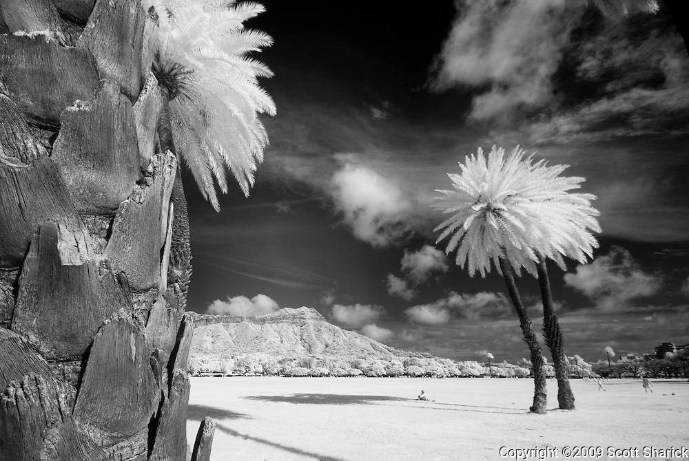 Close up image of a palm tree in infrared.