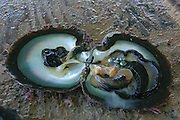 Mataiva, Tuamotus, South Pacific, black pearl farm<br />