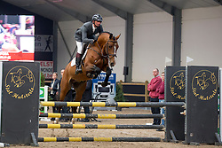 014, Nestor De Mariposa<br /> 3de phase BWP Keuring - Stal Hulsterlo - Meerdonk 2016<br /> © Hippo Foto - Dirk Caremans<br /> 17/03/16