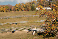 Goshen, New York - Horses graze in the fields at WillsWay Equestrian Center on Oct. 21, 2016.