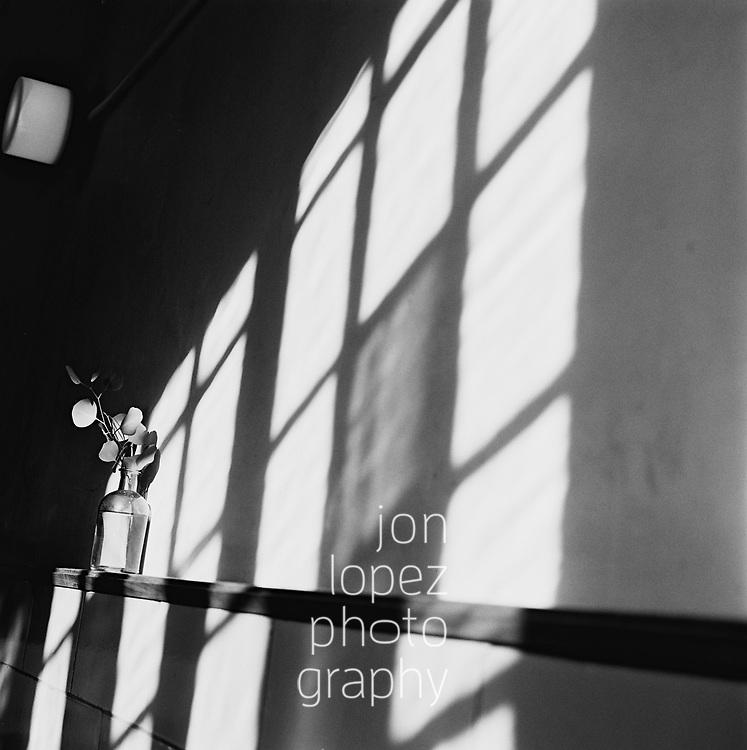 Shadows and a vase. January 2018. Photo by Jon Lopez.