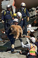 1/27/ 99-AL DIAZ/HERALD STAFF--Miami-Dade fire Rescue workers assist Aspen, a trained search and rescue dog, during rescue operations in Armenia.  From bottom up are, Bobby Suarez, Aspen, Skip Fernandez, Jeff Rouse, Ralph Gonzalez, and at top right is Angel Machado. The city of Armenia was struck hard by Monday's earthquake in Colombia.